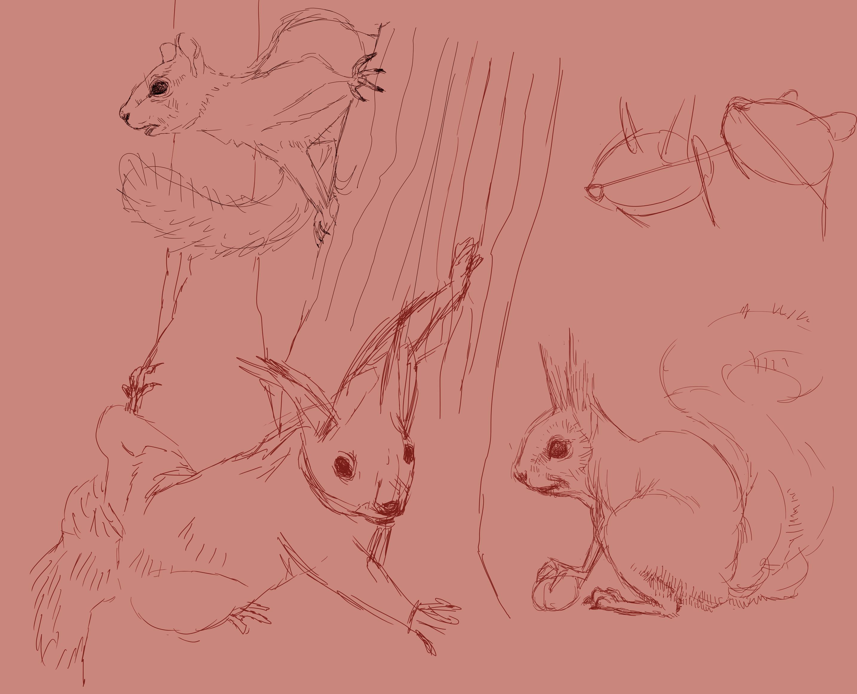 Squirrel studies